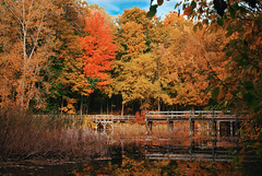 "Bridge to Autumn • <a style=""font-size:0.8em;"" href=""http://www.flickr.com/photos/29084014@N02/21445649018/"" target=""_blank"">View on Flickr</a>"