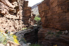Grand Canyon 2015 772