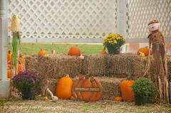 Picture Area (AndiVanPhotog) Tags: orange fall halloween big little pumpkins scarecrow harvest inbetween balesofhay seaoforange douglasvillega pumpkinpatch2015 shepherdofthehillsumc