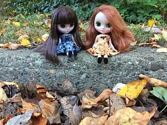 October 20, 2015, Blythe a Day - Leaves are Falling
