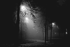 rotehorn // magdeburg (Das halbrunde Zimmer) Tags: street city urban blackandwhite bw fog germany deutschland 50mm nebel magdeburg stadt monochrom autumm urbanphotography urbanarea rotehorn