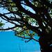 Sea the Tree