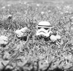 Stormy left his helmet on the grass #lego #starwars #stormtrooper #holiday #travel #afol #photos #photography #camera #legophoto #toyphoto #minifig #minifigures #photo #toy #brickphoto #brick #bricknetwork #piece (Bricktease) Tags: film upload movie poster toy photography star photo lego photos lotr wars marvel afol instagram bricktease