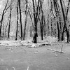 Frozen Forests 002 (noahbw) Tags: autumn trees blackandwhite bw snow cold ice water monochrome forest square landscape frozen blackwhite still woods nikon quiet branches freezing stillness d5000 captaindanielwrightwoods noahbw
