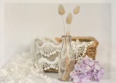dried grass & lace (✿ *•.。.☆•CAH•☆.。.• * ✿) Tags: stilllife texture vintage lace whitebackground mauve romantic hydrangea pastelcolours vintagebottle