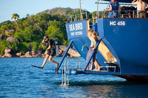 Sea Bird Diving platform