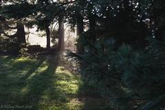 IMG_1936 (hillarycharris) Tags: morning trees mist nature fog sunrise canon landscape outdoors foggy tamron morningmist naturephotography morningfog mistymorning treesinfog foggytrees foggylandscape sunrisephotography treesinmist mistylandscape canonrebelt5 canoneost5