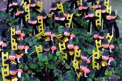 Glck Glck Glck fr Alle (Sockenhummel) Tags: fuji sylvester pflanze fortune luck finepix fujifilm flowerpot blume neujahr x30 klee jahreswechsel schornsteinfeger glcksbringer primel glck mainzerstrasse glckspilz fujix30