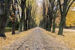 L-2016-10-22-DSC_3479 (lebelgerard) Tags: automne saison nicolet canada ca qubec route arbre
