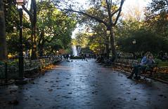 IMG_9744 (kz1000ps) Tags: newyorkcity nyc manhattan architecture urbanism cityscape greenwichvillage washingtonsquarepark evening goldenhour tree canopy