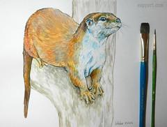 Otter (Espy Art) Tags: otter wildlife animal art painting ink inktober inktober2016