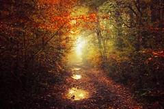 Autumn Walk XLIII. (Zsolt Zsigmond) Tags: forest trees woods autumn fall foliage colours light morning fog mist landscape landschaft colour bright walk day picture flickr sigma trail outdoor red orange yellow leaves tree park