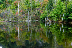 15Maime Pond (anglo10) Tags: japan     field   autumnleaves