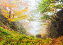 The Quarry (Vemsteroo) Tags: 24mm 5d atmopsheric canon circularpolariser ethereal fog lrthefader leefilters mist morning outdoors padleygorge peakdistrict sunrise surpirseview tse trees woodland autumn bolehill colourful forest quarry colour fall beautiful beautyinnature derbyshire