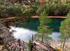 Lochan Uaine (JM-12) Tags: glen more lochan uaine green caledonian forest