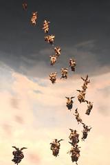 Stormo di angeli - Flock of angels - Bandada de ángeles (COLINA PACO) Tags: stormo bandada ángel angel ange angelo angeli angeles angels presepio pesebre belén napoli nápoles