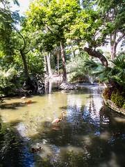 Sanctuary (photo.po) Tags: sanctuary birds water tx flickrclucsa canon canong10 nature