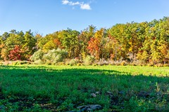 MA Drought ((Jessica)) Tags: woburn hornpond autumn pw seasonal foliage massachusetts seasons trees boston fall newengland pond marsh lagoon drought