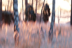 Morning light (evisdotter) Tags: morning light nature trees grass icm intentionalcameramovement sooc
