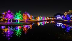 View from Fiori (MikeyBNguyen) Tags: addison texas unitedstates us vitruvianpark vitruvianlights vsco vscofilm nightphotography christmaslights christmastree christmastrees christmas longexposure