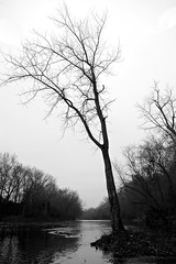 Protuberance (Sine--Qua--Non) Tags: fall winter landscape nature outdoors park indianapolis indy indiana sonya77 slta77 sony1650 sal1650 bw blackwhite monochrome tree trees