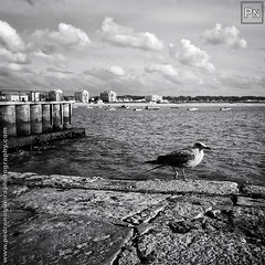 Seagull (Pedro Nogueira Photography) Tags: iphoneography pedronogueira pedronogueiraphotography iphone5 outdoor sãomartinhodoporto portugal bay autumn misty cloudy clouds water landscape sky sea seagull bird blackandwhite monochrome