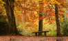 Dunsford Woods, Devon 4a (chris-parker) Tags: river teign devon steps bridge dunsford stepping stones village autumn