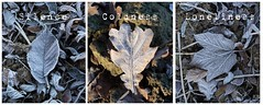 HIVER (Jean-Luc S) Tags: winter leafs hiver cold solojlm sollièrejl canoneos7d canonef2470f4liiusm morning brainelalleud belgium belgique