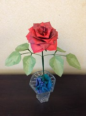 A-Muiri-ken Beauty Rose.