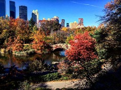 #autumninnewyork #centralpark #newyorkcity #usa