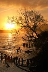 River Exe at Dawn (2) (matt.clark25) Tags: sunrise dawn morning orange red mist fog water exe riverexe devon exeter doublelocks sky calm autumn groynes