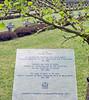 Gingko (Antropoturista) Tags: belgium lommel gingko cemetery memorial remember cross message semiotics volksbunddeutschekriegsgräberfürsorge