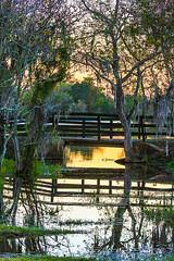 Sunset Bridge (wyojones) Tags: texas wallercounty fieldstore josephroad springcreek trees creek country stream sunset silhouttes water bridge tributary wyojones np