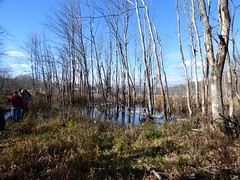 Hiking in Crane Swamp (FoxInTheWoods) Tags: hiking walking landscape autumn fall trees deadtrees craneswamp swamp