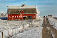 Irricana Barn Explored #28 Nov 23. (Canon Queen Rocks (1,130,000 + views)) Tags: structure barn irricana fence colours cold frost landscape landscapes alberta canada sky scenery scenic farmland farm outdoors