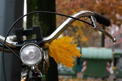 autunno in citt (alesolofoto) Tags: bicicletta foglia citt milano autunno autumn lombardia italia