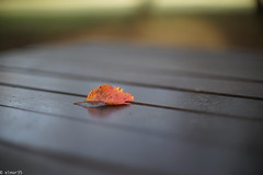 Les Feuilles mortes (elmar35) Tags: sony canon 50mm 55mm f12 bokeh outfocus autumn tokyo japan art