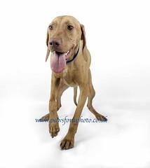 Russ 1 (Chris Willis 10) Tags: portrait dog pet collie border visa wwwpawsforaphotocouk