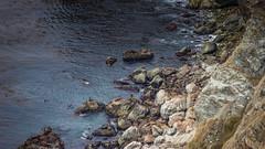 Seals! (RockyRockGT) Tags: ocean bigsur seals