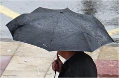 Aerodynamisch * Aerodynamically * Aerodinmicamente . P1110031-001 (maya.walti HK) Tags: espaa water rain lluvia spain agua wasser flickr umbrellas paraguas regen spanien regenschirme 2014 schirme 111015 panasoniclumixfz200 copyrightbymayawaltihk