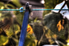 Spiders Washing (Twiggy's Photography) Tags: morning flowers sun mist snow cold macro green weather yellow fog lens frost spiders derbyshire rope 100mm line seeds l series pegs washing due chesterfield autunm