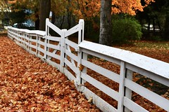 temple fence (CCphotoworks) Tags: autumn fallleaves fence whitefence orangeleaves sharonontario eastgwillimburyontario sharontemplefence sharontempleontario