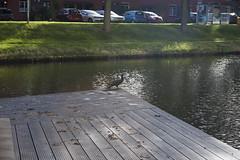 Floriade_251015_46 (Bellcaunion) Tags: park autumn fall nature zoetermeer rokkeveen florapark