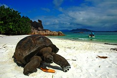Tortoise, Seychelles © Zhan Tian / Dreamstime