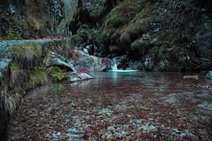 Val Vertova (Garpez***) Tags: autumn water foglie landscape val acqua autunno bergamo paesaggio vallata cascate seriana montagan vertova