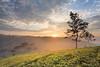 A Fine Morning in Pengalengan-1372 (franciscus nanang triana) Tags: travel beautiful sunrise indonesia landscape bandung westjava indah pagi teaplantation alam cantik kebunteh pengalengan matahariterbit canon5dmkii franciscusnanangtriana