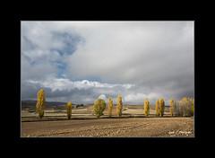 OTOÑO V (Juan J. Marqués) Tags: azul otoño tierras teruel texturas nwn amarillos chopos ocres