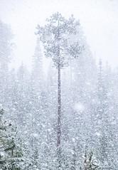 Blizzard (ExpatPNW) Tags: snow mountains washington cascades pacificnorthwest fujifilm washingtonstate blizzard cascade pnw pnwlife fujifilmxt1 pnwonderland