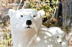 _DSC9040 (KateSi) Tags: bear animals zoo oso colorado lego bears denver polarbear animales polar denverzoo bjorn ours osos isbjorn bjorner