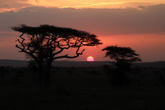 Sunset at Serengeti (Tanzania) (thomsen77) Tags: africa park travel camping sunset people lake mountains nature animal canon landscape tanzania photography ol photo nationalpark flickr jackal desert image explore saltlake national zebra traveling serengeti doinyo lengai vulcano developingcountry zebras eastafrica jackals vulcanic natron lseries llens eos7d canoneos7d canon7d